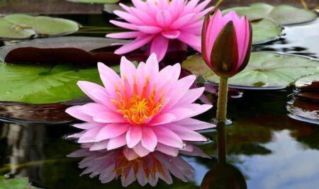 A Flor de Lótus, Yoga e Ayurveda
